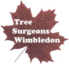 Tree Surgeons Wimbledon
